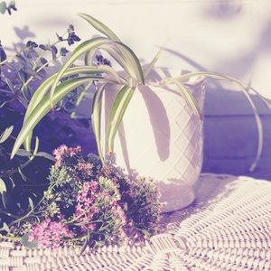 White Flowerpot